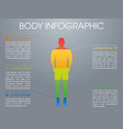 modern colorful infographic with human body vector image