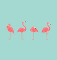 set of flamingos isolated on background vector image
