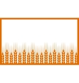 white background with wheat ears vector image vector image