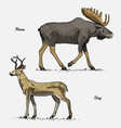 moose or eurasian elk and stag or deer hand drawn vector image vector image