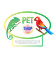pet shop poster with animals vector image vector image