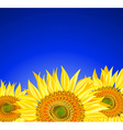 Row of Sunflowers on a Blue Background vector image vector image