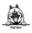wolf spitz peeking dog - head isolated on white vector image vector image