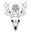composition deer skull and magic symbols vector image vector image