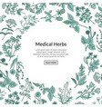 hand drawn medical herbs background with vector image vector image