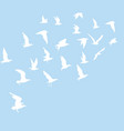 silhouettes of flying birds vector image