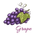 Black grape berries icon vector image