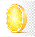 orange slice isolated vector image vector image