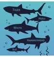 Shark silhouettes set Sea fish animal vector image