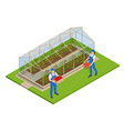 isometric greenhouse isolated on white growing vector image