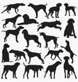pointer-dog silhouettes vector image vector image