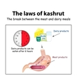 The laws of kosher The break between the meat and vector image