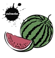 berry juicy watermelon vector image