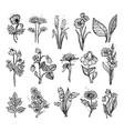 hand drawn wildflowers vector image