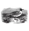 masked gull vintage vector image vector image