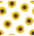 floral seamless pattern with sunflower heads vector image