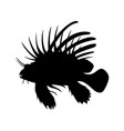lionfish vector image vector image
