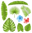 Set of Tropical Leaves Collection Plants Isolated vector image