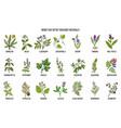 Best herbs for body detox