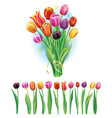 bouquet and border with multicolor tulips vector image vector image