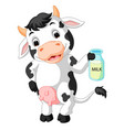 cow holding milk bottle vector image vector image