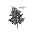 green leatherleaf fern hand draw vector image vector image