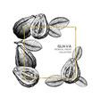 guava hand drawn vector image vector image