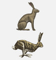 rabbit or hare sitting and running hand drawn vector image vector image