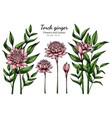 set pink torch ginger flower and leaf drawing vector image vector image