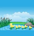 cute ducks swimming on pond vector image