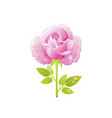 pink rose flower floral icon realistic cartoon vector image vector image