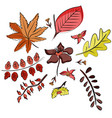 set of leaves in doodle style hand drawn vector image vector image