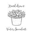 succulent plant in a concrete flower pot hand vector image vector image