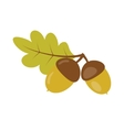 Acorns with green leaf vector image