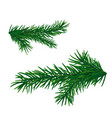 christmas tree branch fir branch isolated vector image