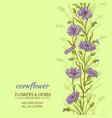 cornflower background vector image