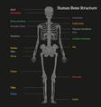 human bone structure diagram vector image