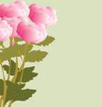 Peonies bouquet vector image vector image