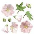 Set of Pink mallow flowers on white background vector image