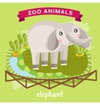 Zoo Animal Elephant vector image