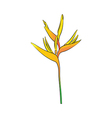 Heliconia flower vector image