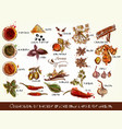 collection of spices and herbs for design vector image