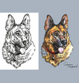 German shepherd in color and black and white
