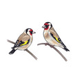 hand drawn two goldfinches sitting on branches vector image vector image