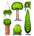 Different decorative plants vector image vector image