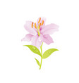 pink lily flower floral icon realistic cartoon vector image vector image
