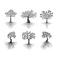 set trees with roots on white background vector image