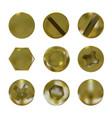 a set of metal golden screws and bolt vector image
