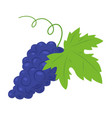 grapes fruit berry icon vector image vector image