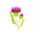 thistle flower floral icon realistic cartoon vector image vector image
